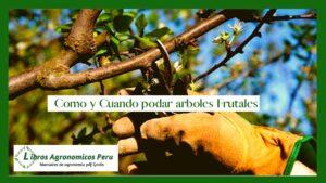 Como y cuando podar arboles frutales