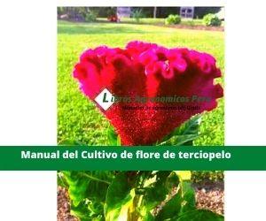Manual de cultivo Celosia cristata (flor de terciopelo) pdf