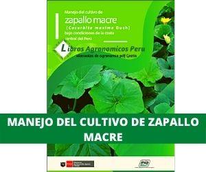 Manual del Cultivo de Zapallo Macre. PDF