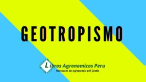 ¿Qué es un geotropismo?