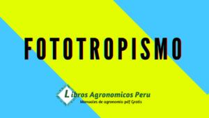 ¿Qué es fototropismo?