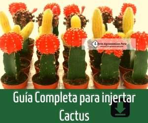 Como Injertar Cactus paso a paso FACIL